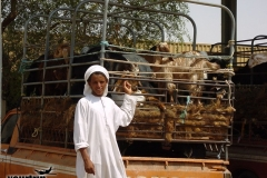 Dubai-2001_171